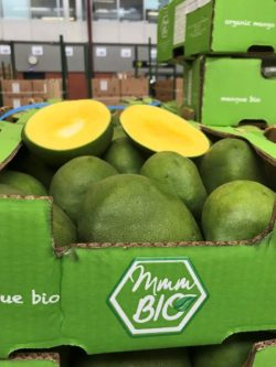 Organic mangoes from Burkina Faso  Part 2! - OTC Organics : OTC Organics